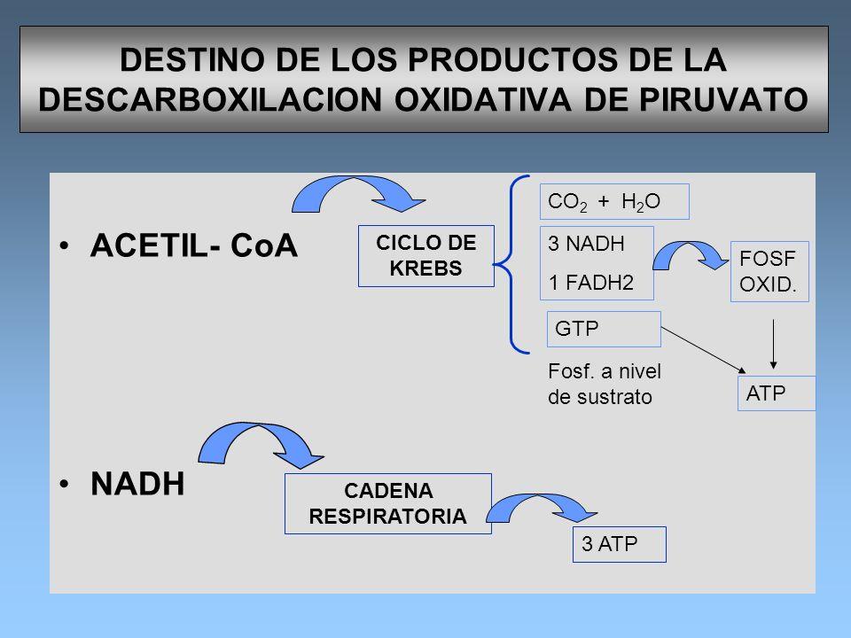 DESTINO DE LOS PRODUCTOS DE LA DESCARBOXILACION OXIDATIVA DE PIRUVATO