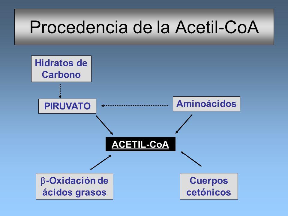 Procedencia de la Acetil-CoA