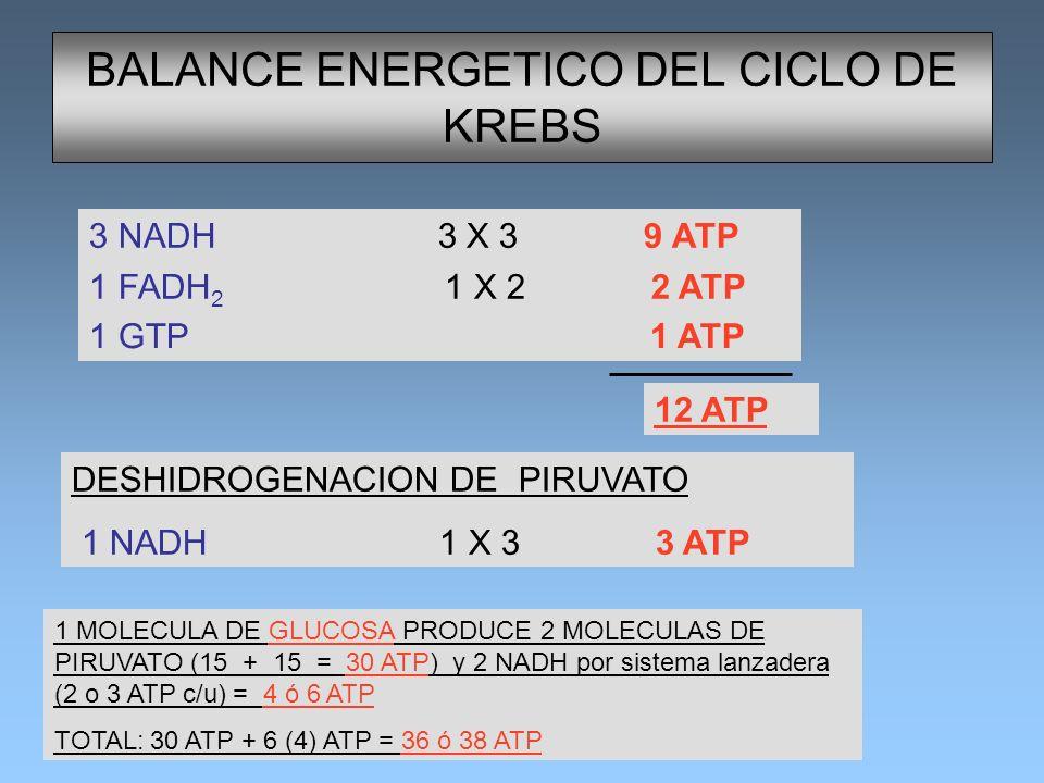 BALANCE ENERGETICO DEL CICLO DE KREBS