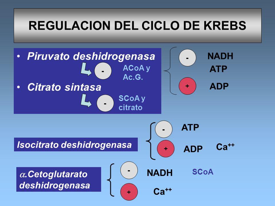 REGULACION DEL CICLO DE KREBS