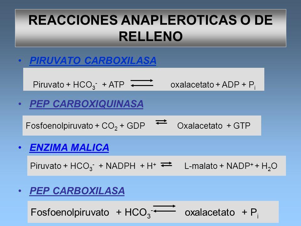 REACCIONES ANAPLEROTICAS O DE RELLENO