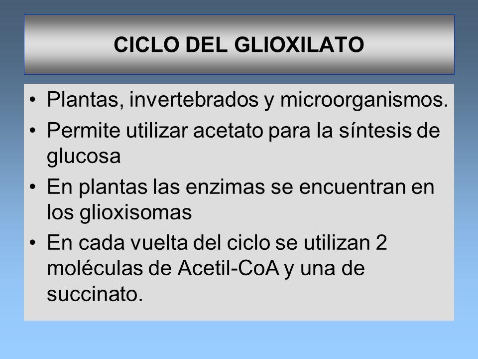 CICLO DEL GLIOXILATOPlantas, invertebrados y microorganismos. Permite utilizar acetato para la síntesis de glucosa.