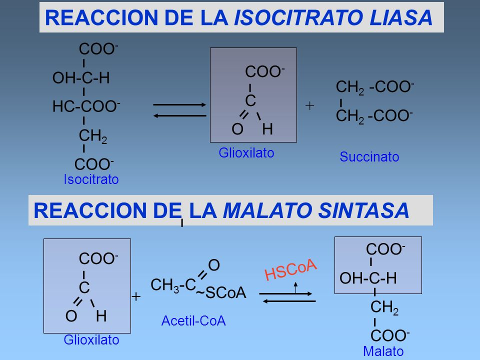 REACCION DE LA ISOCITRATO LIASA