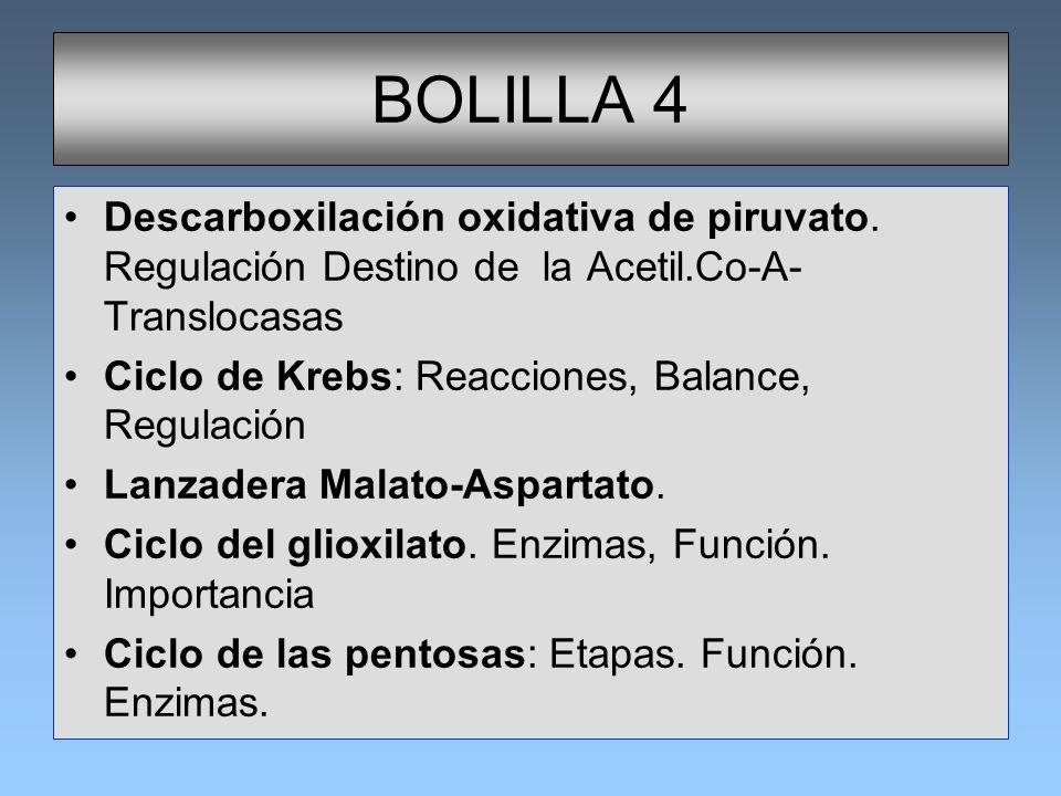 BOLILLA 4 Descarboxilación oxidativa de piruvato. Regulación Destino de la Acetil.Co-A-Translocasas.