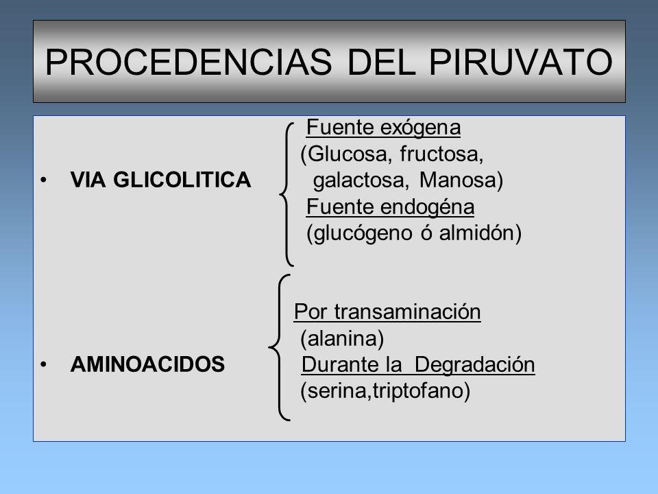 PROCEDENCIAS DEL PIRUVATO