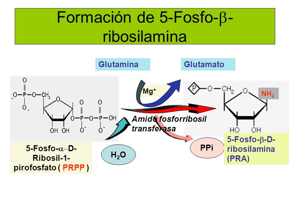 Formación de 5-Fosfo-b-ribosilamina
