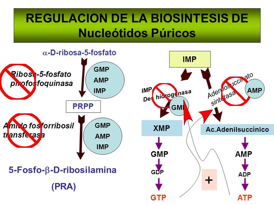 REGULACION DE LA BIOSINTESIS DE Nucleótidos Púricos