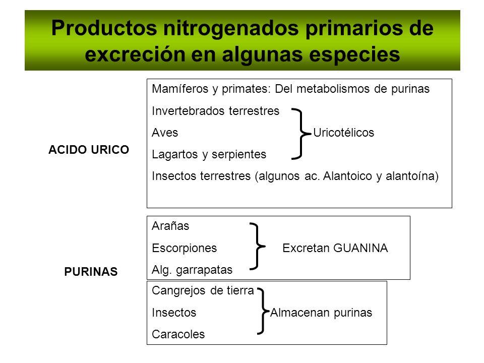 Productos nitrogenados primarios de excreción en algunas especies