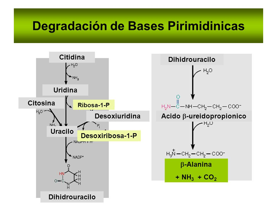 Degradación de Bases Pirimidinicas