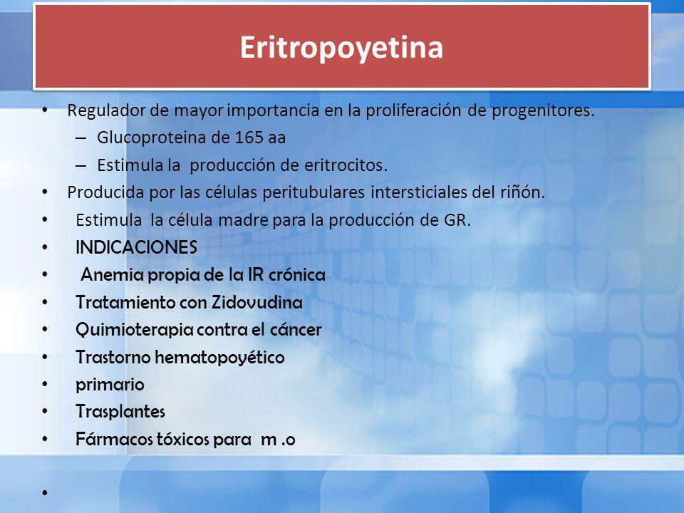 Eritropoyetina Regulador de mayor importancia en la proliferación de progenitores. Glucoproteina de 165 aa.