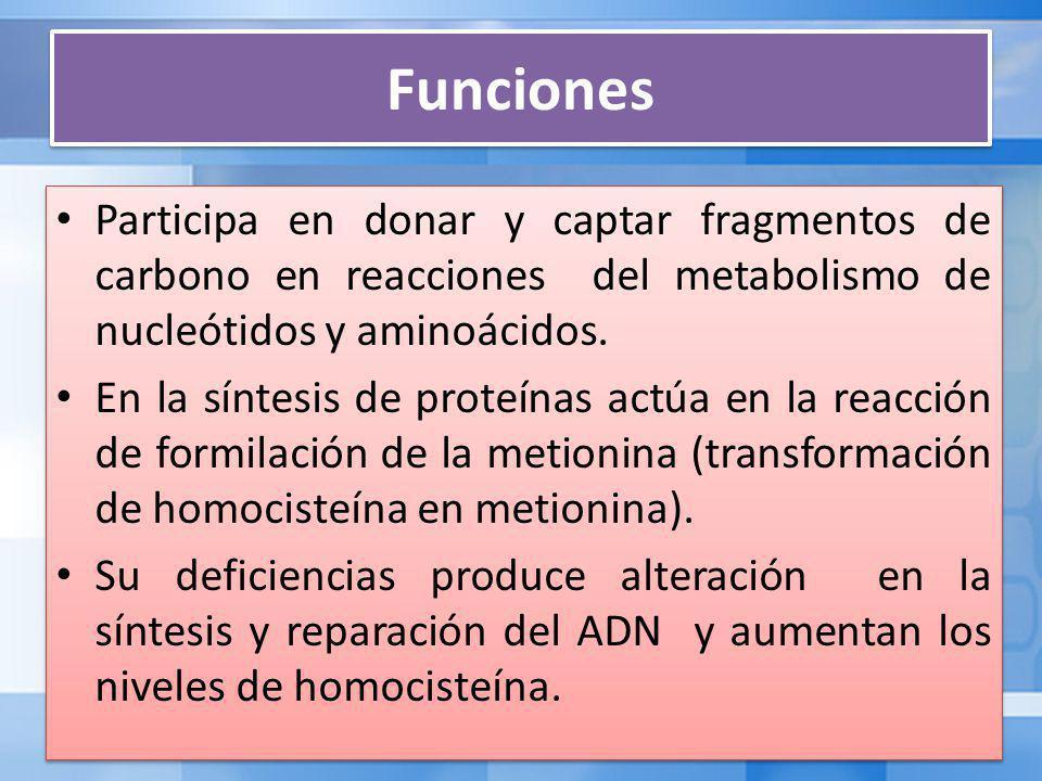Funciones Participa en donar y captar fragmentos de carbono en reacciones del metabolismo de nucleótidos y aminoácidos.