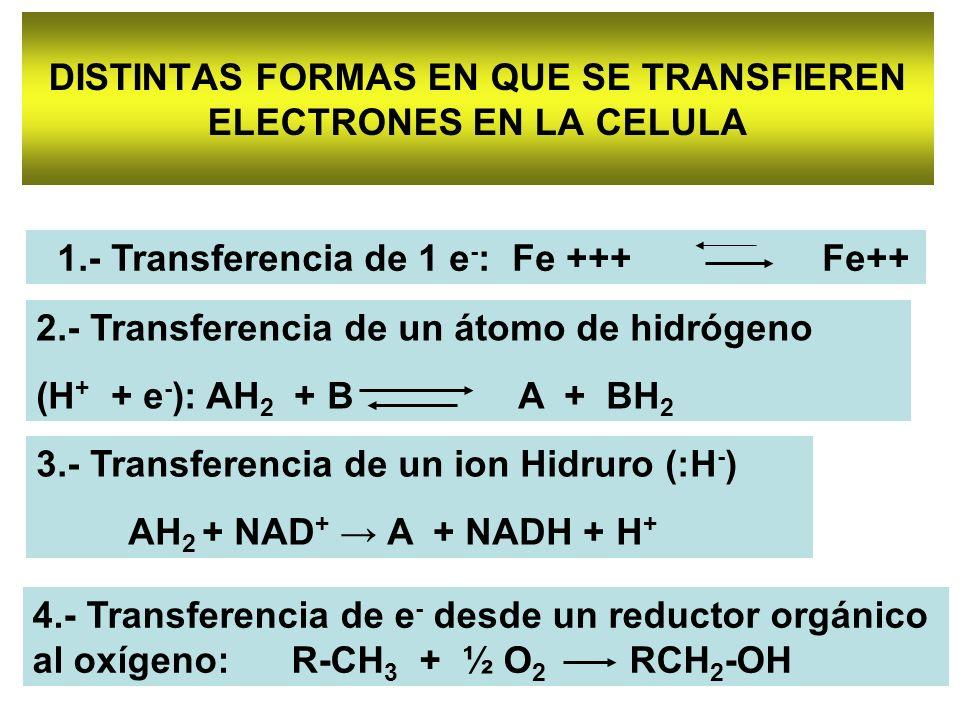 DISTINTAS FORMAS EN QUE SE TRANSFIEREN ELECTRONES EN LA CELULA