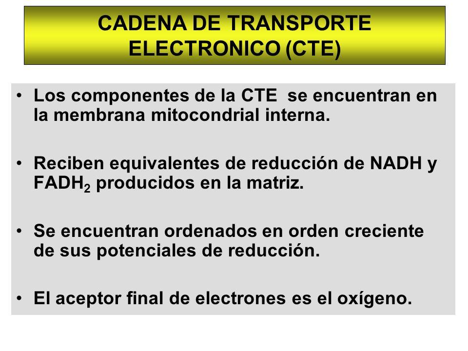 CADENA DE TRANSPORTE ELECTRONICO (CTE)