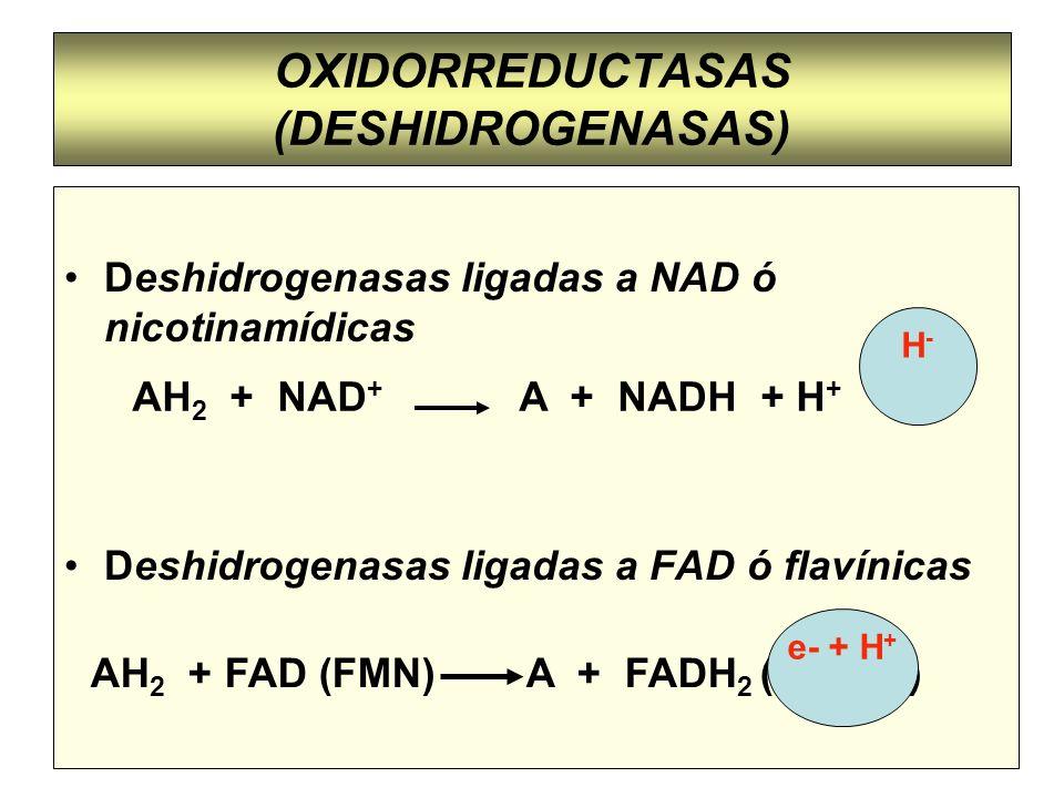 OXIDORREDUCTASAS (DESHIDROGENASAS)