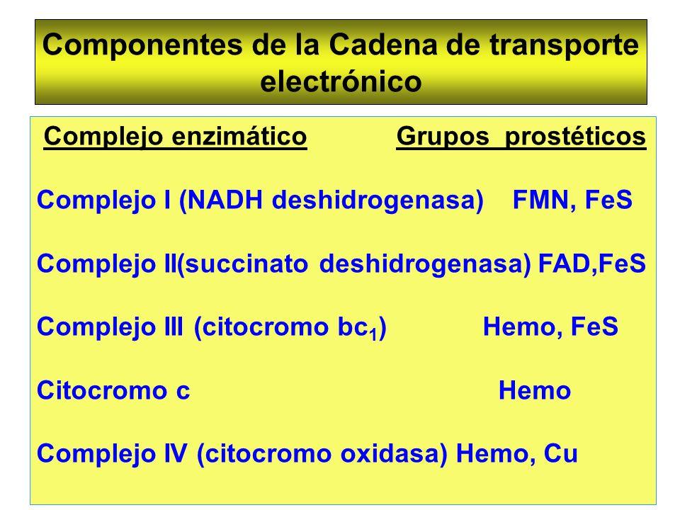 Componentes de la Cadena de transporte electrónico