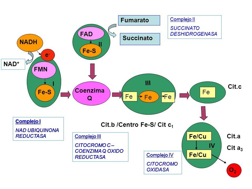 Cit.b /Centro Fe-S/ Cit c1