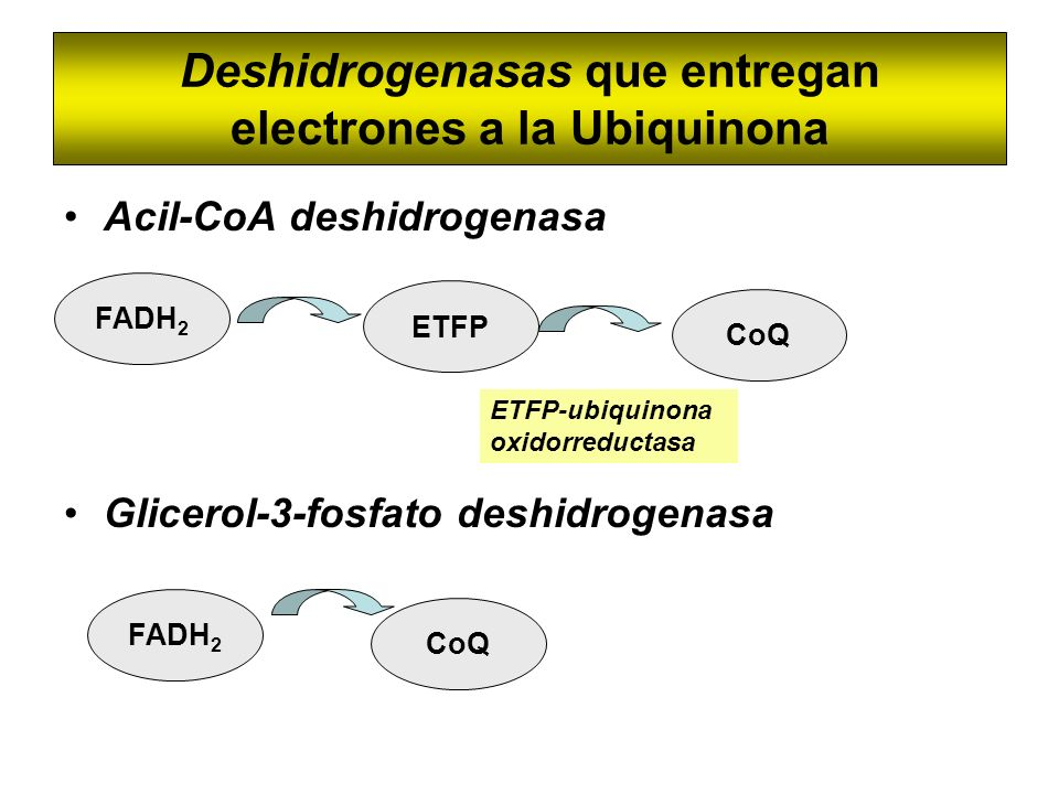 Deshidrogenasas que entregan electrones a la Ubiquinona