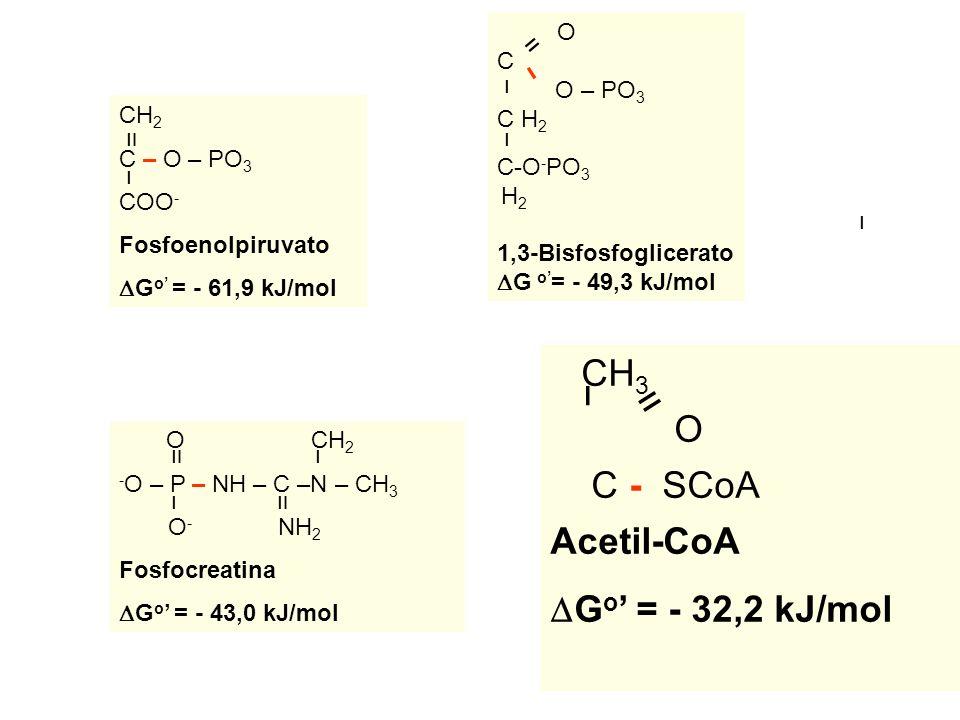 CH3 ו O װ C - SCoA Acetil-CoA DGo' = - 32,2 kJ/mol O C O – PO3 C H2