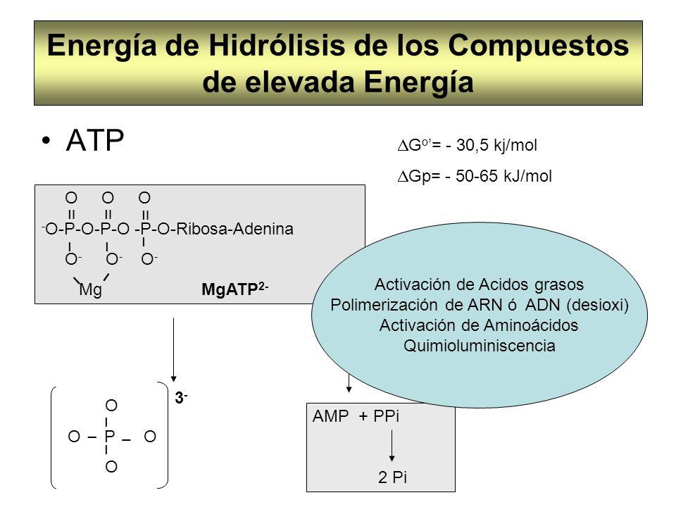 Energía de Hidrólisis de los Compuestos de elevada Energía