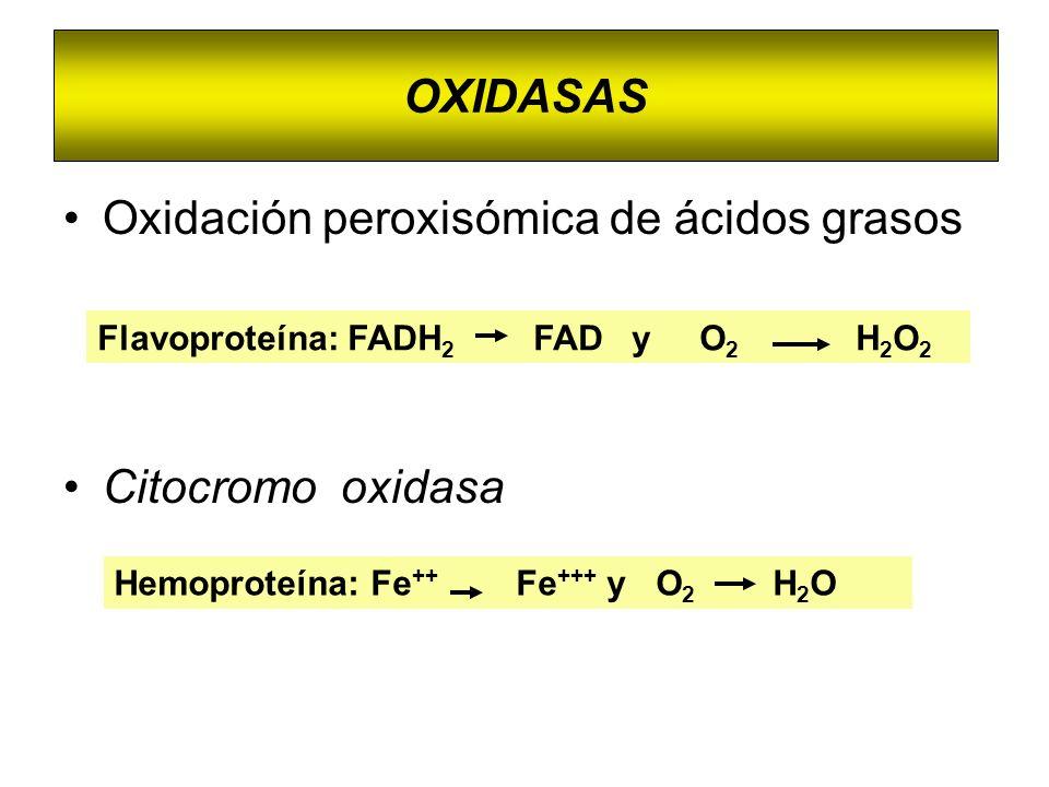 Oxidación peroxisómica de ácidos grasos