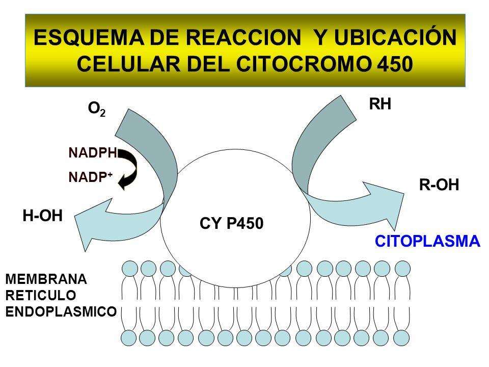 ESQUEMA DE REACCION Y UBICACIÓN CELULAR DEL CITOCROMO 450