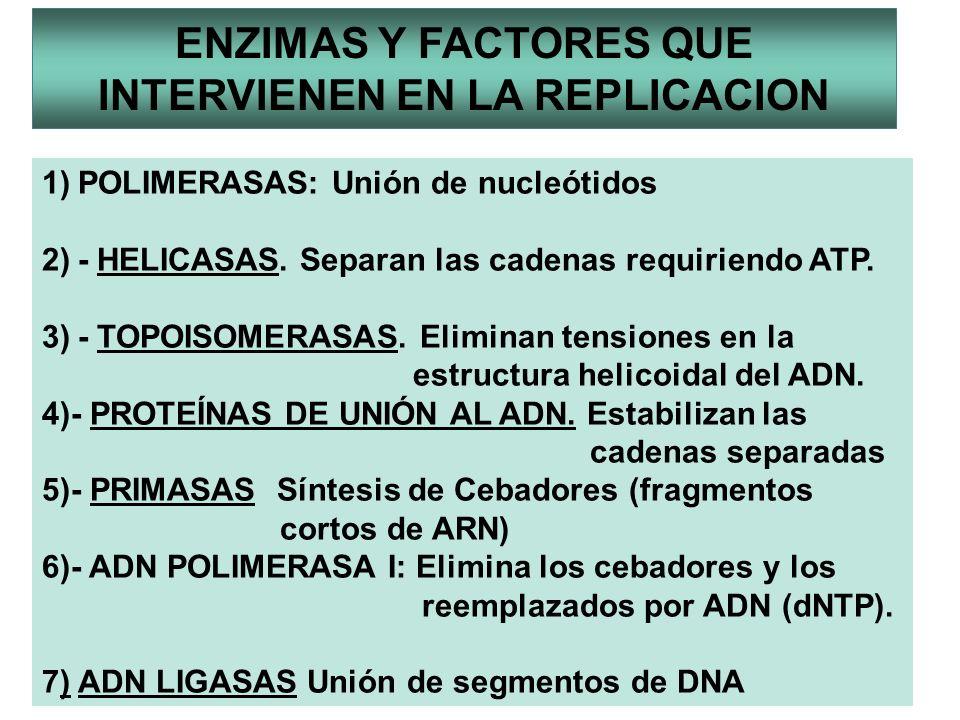 ENZIMAS Y FACTORES QUE INTERVIENEN EN LA REPLICACION