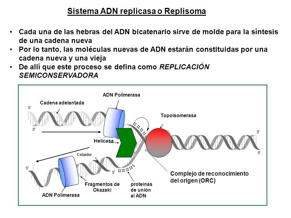 Sistema ADN replicasa o Replisoma