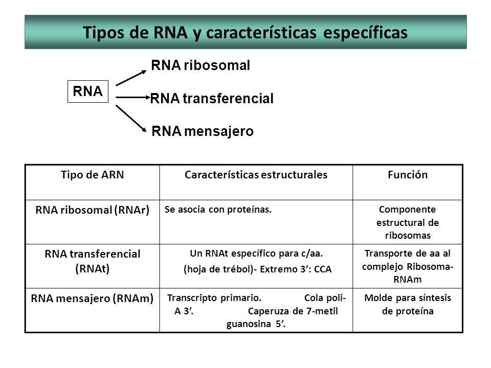 Tipos de RNA y características específicas