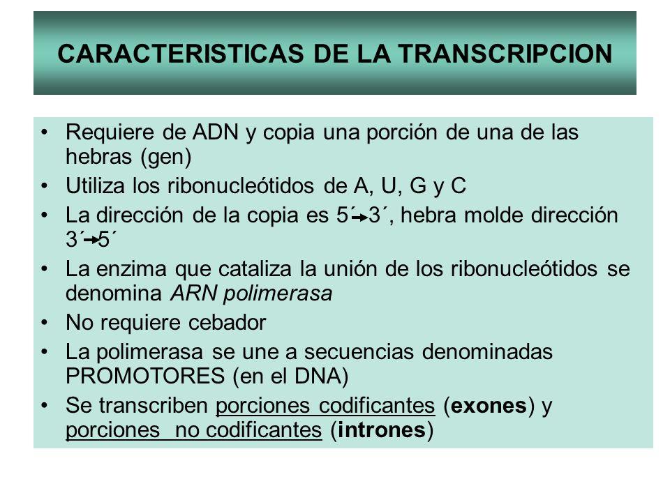 CARACTERISTICAS DE LA TRANSCRIPCION