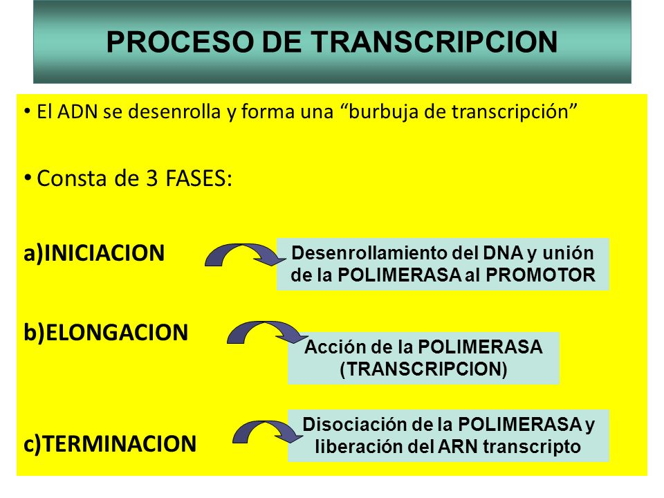 PROCESO DE TRANSCRIPCION