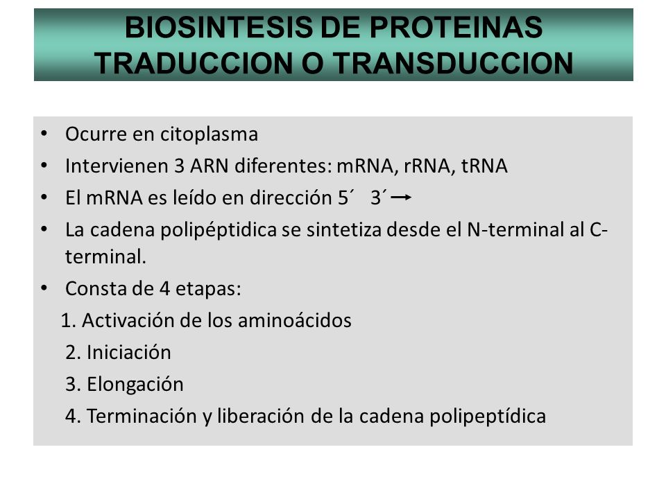 BIOSINTESIS DE PROTEINAS TRADUCCION O TRANSDUCCION