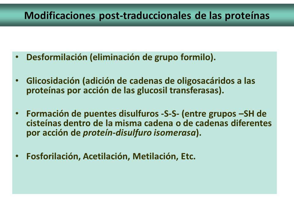 Modificaciones post-traduccionales de las proteínas