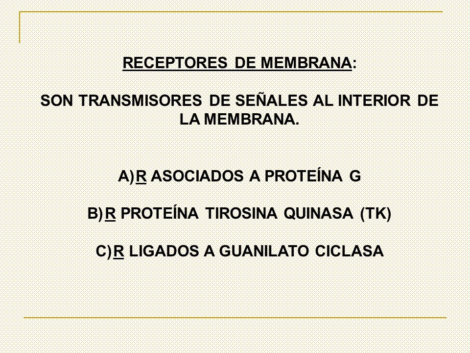 RECEPTORES DE MEMBRANA: