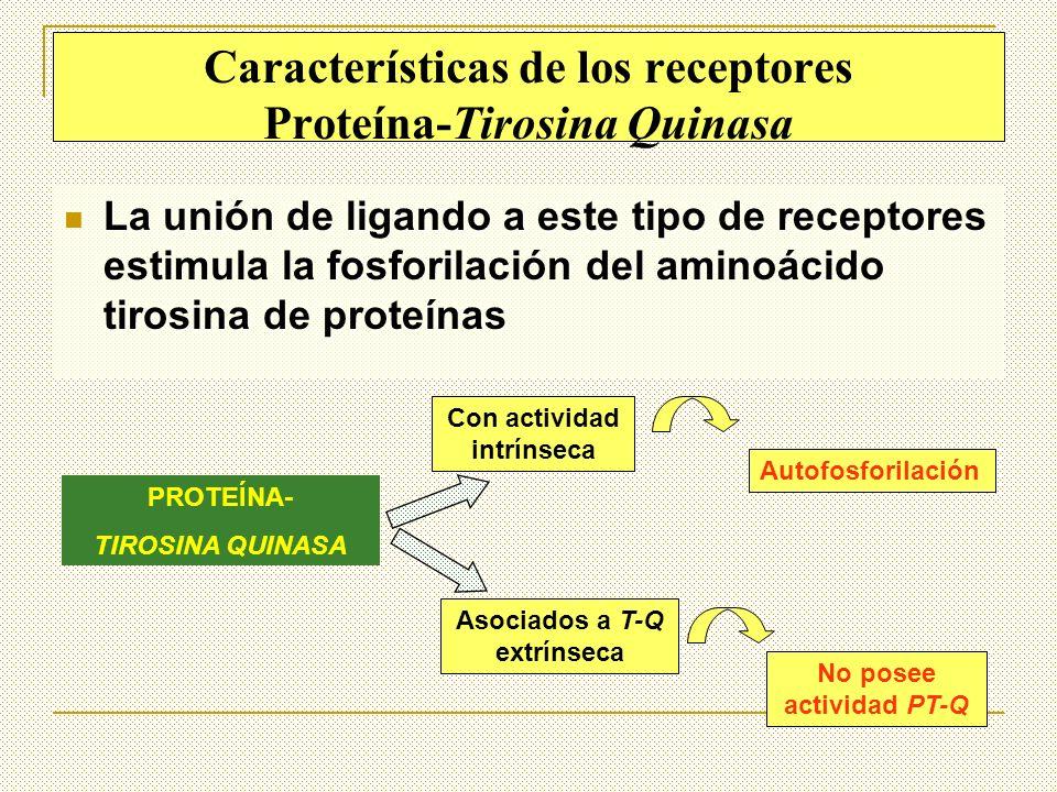 Características de los receptores Proteína-Tirosina Quinasa