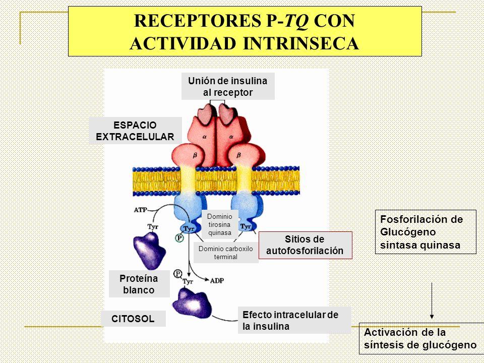 RECEPTORES P-TQ CON ACTIVIDAD INTRINSECA