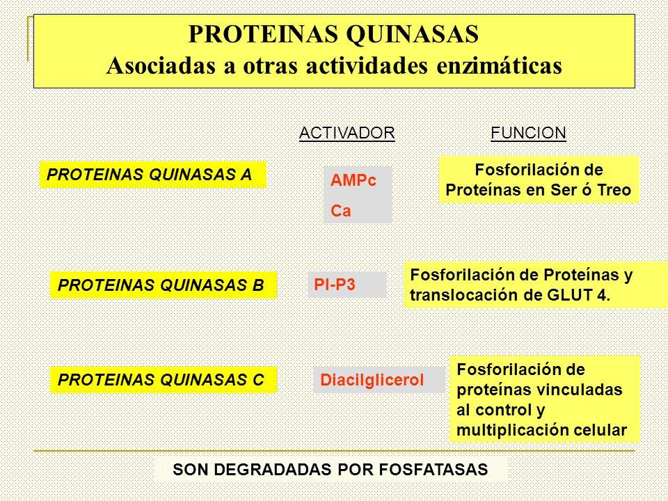 PROTEINAS QUINASAS Asociadas a otras actividades enzimáticas
