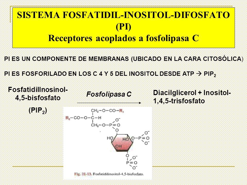 FosfatidilInosinol-4,5-bisfosfato