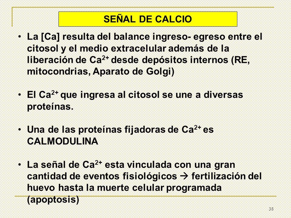 SEÑAL DE CALCIO