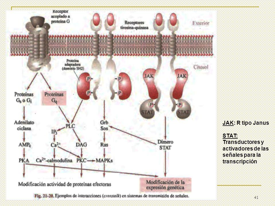 JAK: R tipo Janus STAT: Transductores y activadores de las señales para la transcripción
