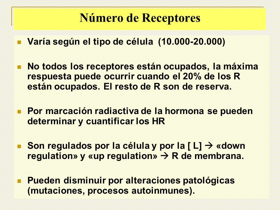 Número de Receptores Varía según el tipo de célula (10.000-20.000)