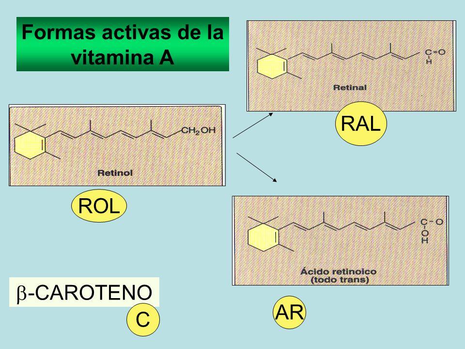 Formas activas de la vitamina A