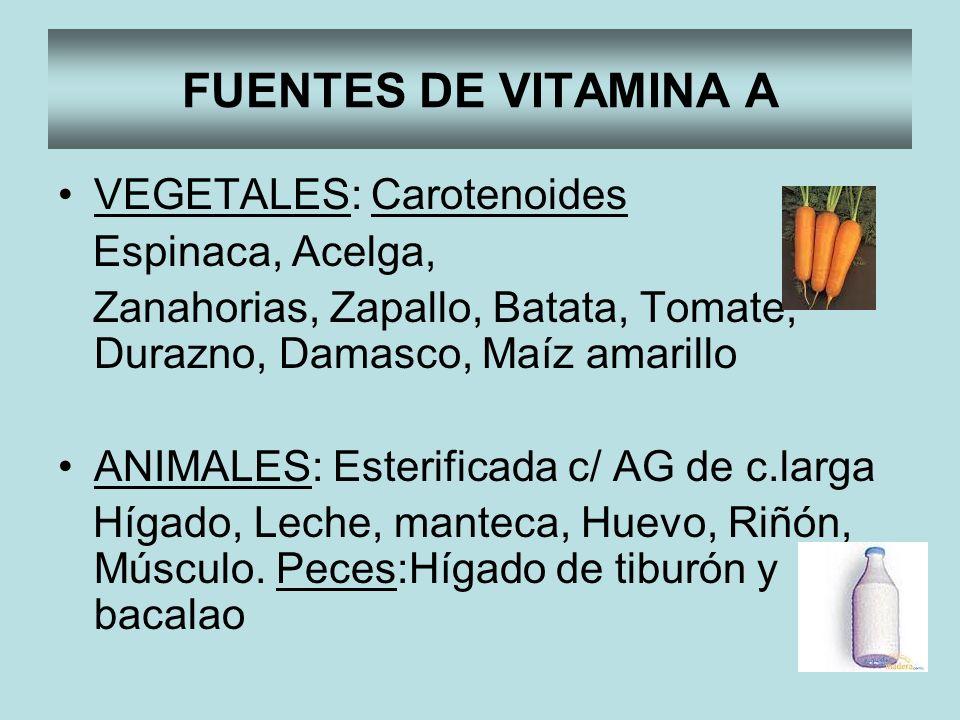 FUENTES DE VITAMINA A VEGETALES: Carotenoides Espinaca, Acelga,