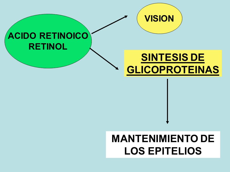 SINTESIS DE GLICOPROTEINAS MANTENIMIENTO DE LOS EPITELIOS