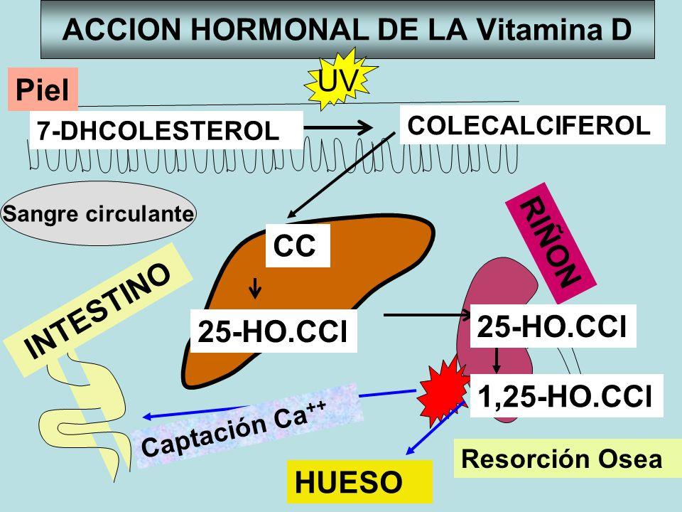 ACCION HORMONAL DE LA Vitamina D