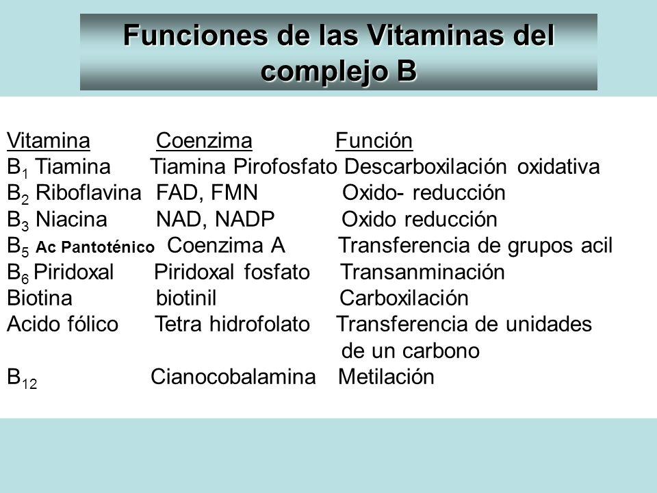 Funciones de las Vitaminas del complejo B
