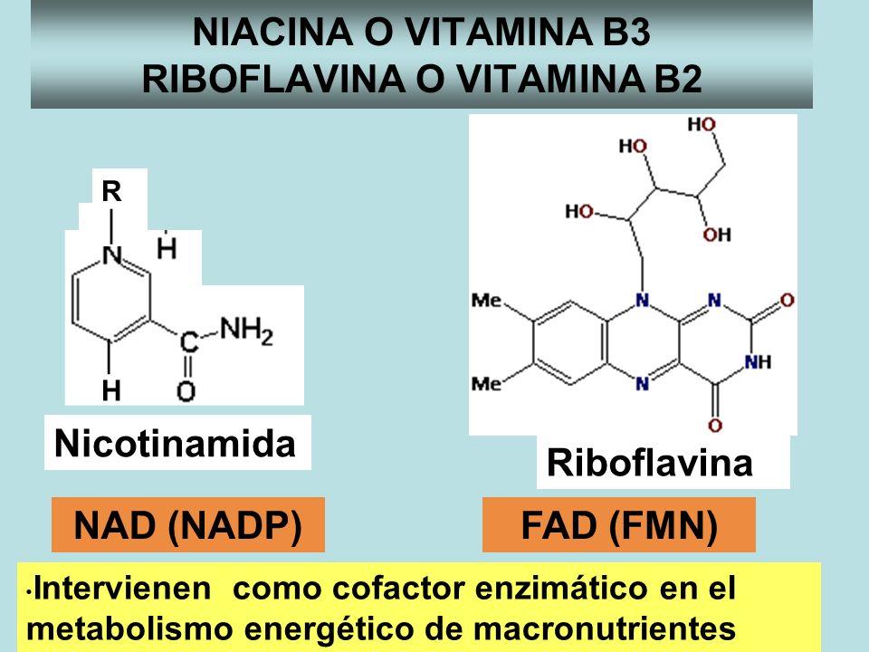 NIACINA O VITAMINA B3 RIBOFLAVINA O VITAMINA B2