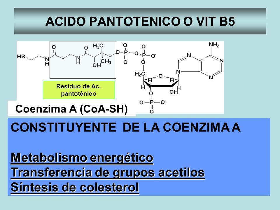 ACIDO PANTOTENICO O VIT B5