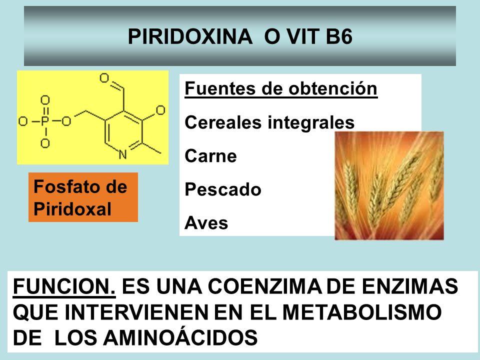 PIRIDOXINA O VIT B6 Fuentes de obtención. Cereales integrales. Carne. Pescado. Aves. Fosfato de.