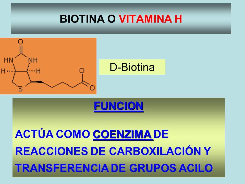 BIOTINA O VITAMINA H D-Biotina. FUNCION.