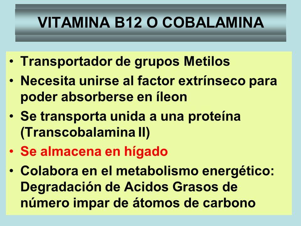 VITAMINA B12 O COBALAMINA